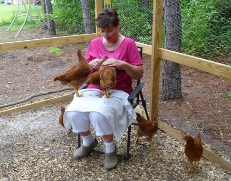 Garden, Chickens 034