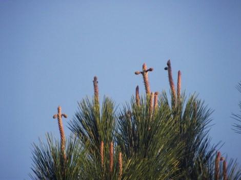 037 pine tree crosses
