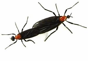 SX00129_9_868280a love bugs
